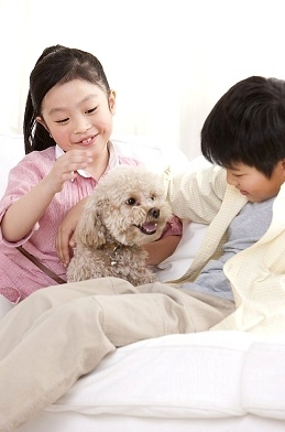 Prepare your pets for new baby
